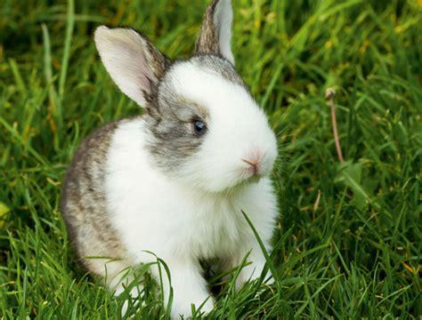 coniglio alimentazione la corretta alimentazione coniglio quattro ze