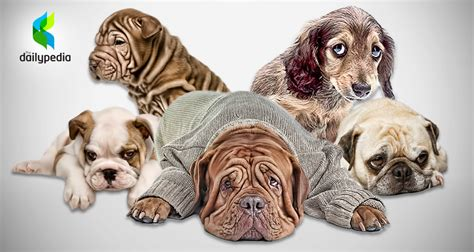 can dogs get depressed five signs that your is depressed dailypedia