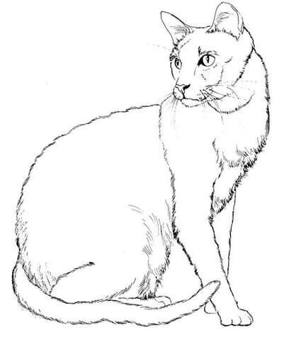 big realistic cat coloring pages coloring pages