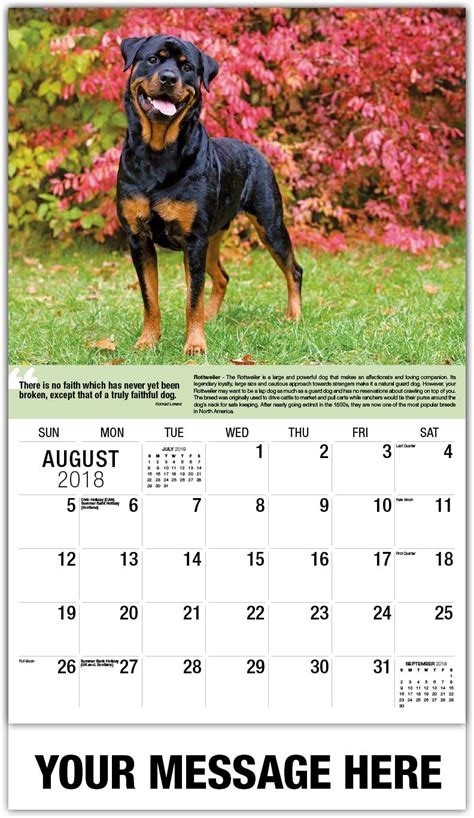 2018 cow dogs calendar stoecklein photography dogs calendar quot man s best friend quot 65 162 advertising calendars