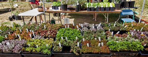 Garden Plants For Sale by Heronswood Events