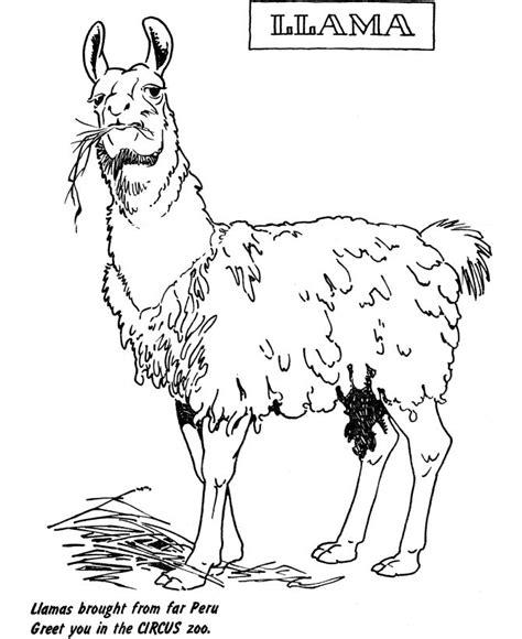 zoo animal coloring page llama exhibit desenhos para