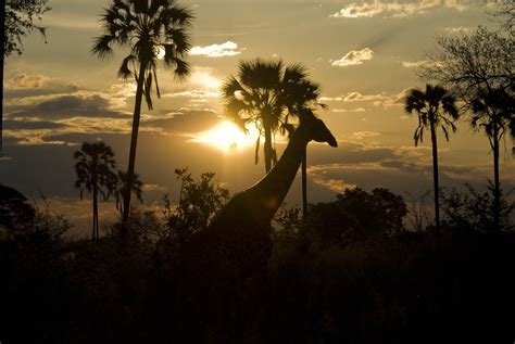 National Geographic Also Search For Hangout From The Okavango Delta In Africa National Geographic