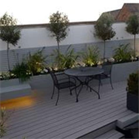 alberelli da terrazzo piante da balcone sempreverdi piante da terrazzo