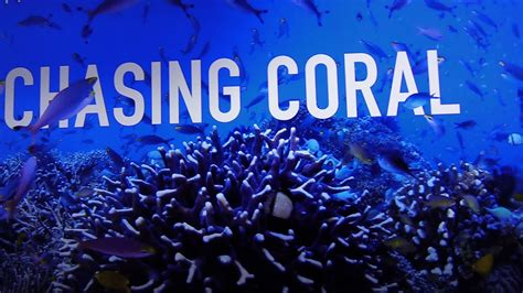 watch online chasing coral 2017 full movie hd trailer chasing coral netflix watch it coral reefs youtube