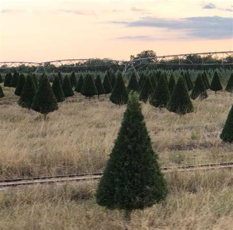 gallery of dewberry farm christmas trees fabulous homes