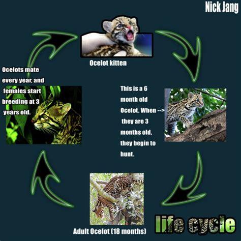jaguar cycle diagram jaguar animal cycle diagram jaguar auto parts