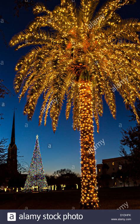 charleston south carolina christmas lights palm tree covered in fairy lights for christmas in