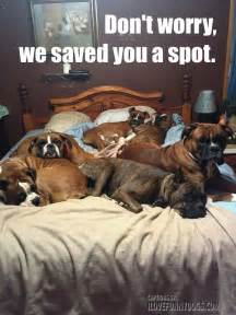 do it in a bed 9 realities of a bed with your barkpost