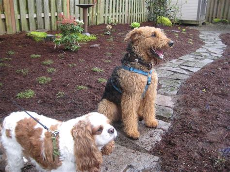 dog friendly backyard ground cover dog in backyard 28 images best 25 dog playground ideas