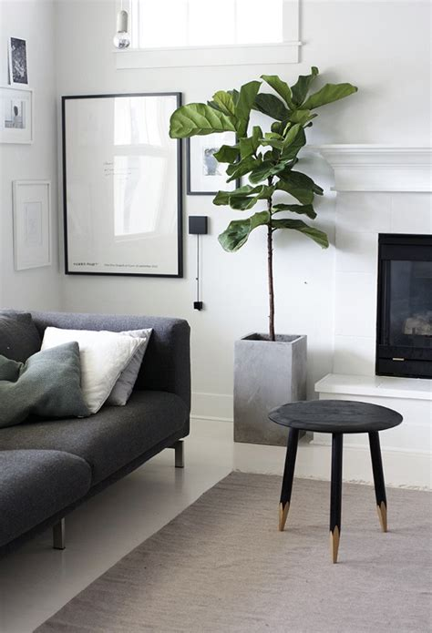 living room plant 20 modern indoor garden with scandinavian style home