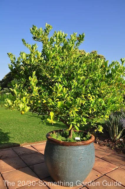 lime tree   heavy glazed container