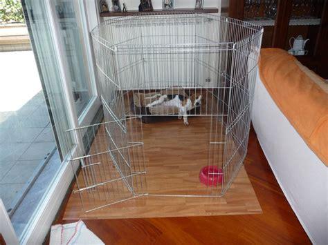 beagle alimentazione corretta amico beagle cosa fare e avere prima di portare a casa