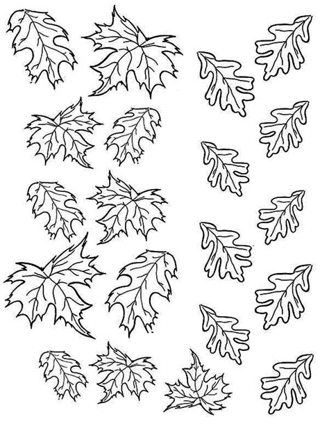 coloring page of small leaves maple leaf coloring pages bestofcoloring com