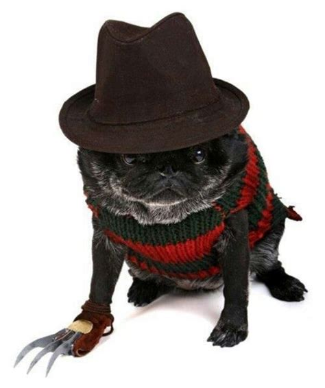 pug costume ideas 48 best images about pug costume on what s the costumes and the pug