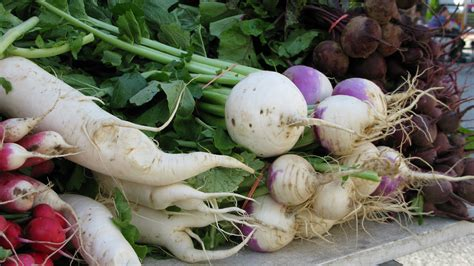 root crops vegetables nurturing wisdom through nourishing the mind and