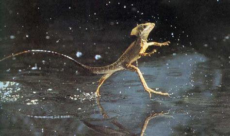 imagenes reales de un basilisco top 10 los animales m 225 s veloces del mundo ecoosfera