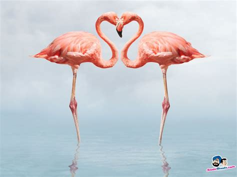 Flamingo Wallpaper To Buy | flamingos birds wallpaper couples pinterest flamingo