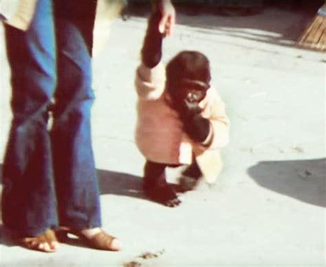 Azka Koko Daily 02 koko the gorilla s bond with san francisco zoo trainer revealed in documentary daily
