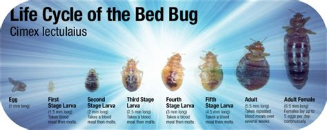 how to prevent bed bugs from spreading your health is your wealth review of products for a
