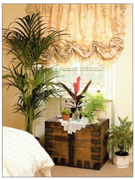 plant for bedroom best plants for a bedroom