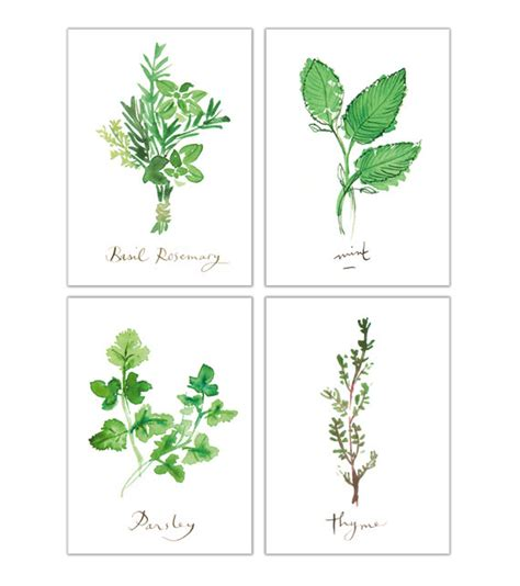 free printable herb poster kitchen prints set of 4 herb prints herb illustration