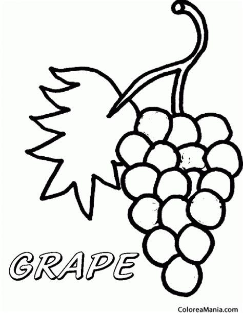 imagenes de uvas a color para imprimir colorear uva sin pepitas flame seedles frutas dibujo