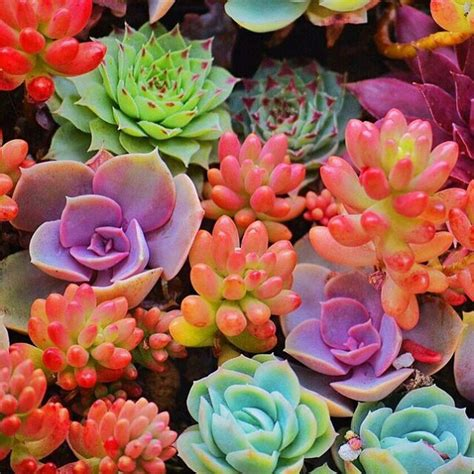 10 amazing ways succulents can decorate your outdoors outdoortheme com
