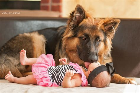 newborn german shepherd puppies bruno and german shepherd puppy and baby newborn photographer