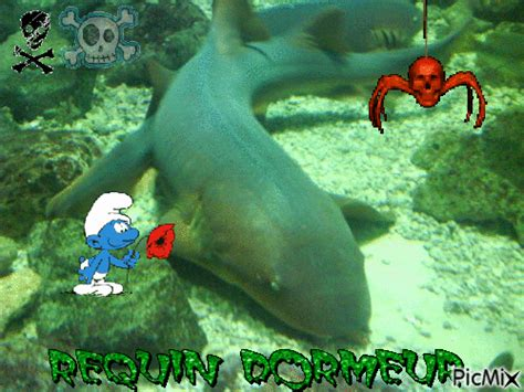 Requin Dormeur by Requin Dormeur