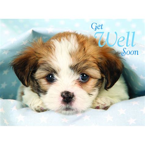 getting puppies get well card puppy blanket buy a litle pups