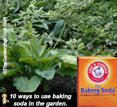 killing crabgrass with baking soda 10 ways to use baking soda in the garden