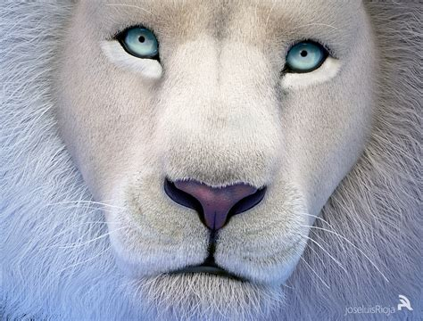 imagenes medicas amado de leon infografia animal le 211 n blanco domestika