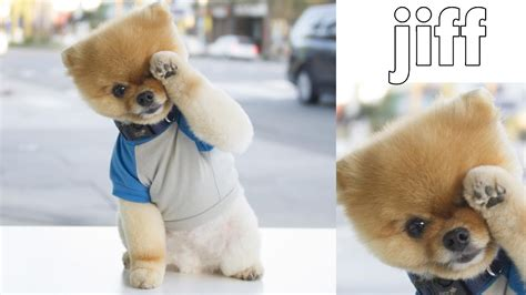 what of is jiffpom jiffpom jiff shake it 2016 funnies 2016 new 055