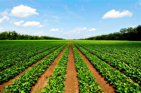 pictures of farm agricultural land farms for sale land agents