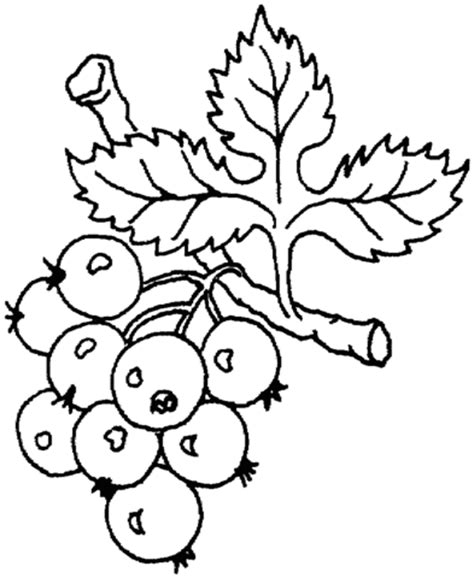 grape leaves coloring page grape leaves coloring page coloring pages
