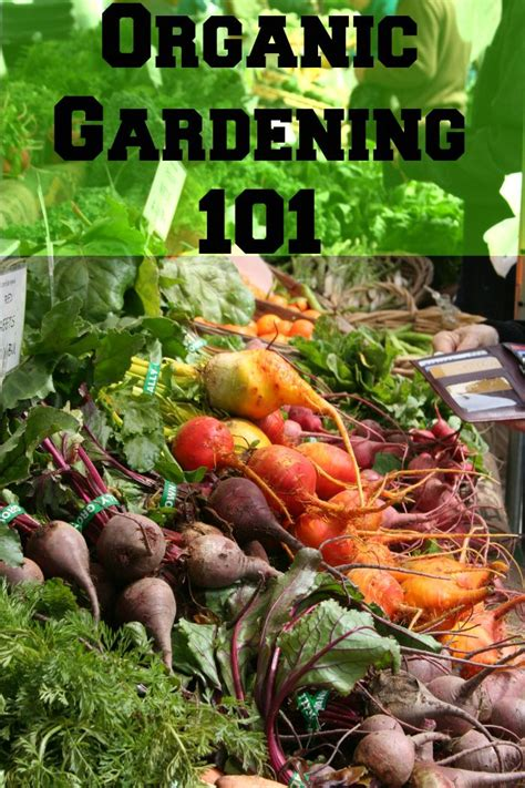 Best Insecticide For Vegetable Garden by 25 Best Ideas About Organic Gardening On