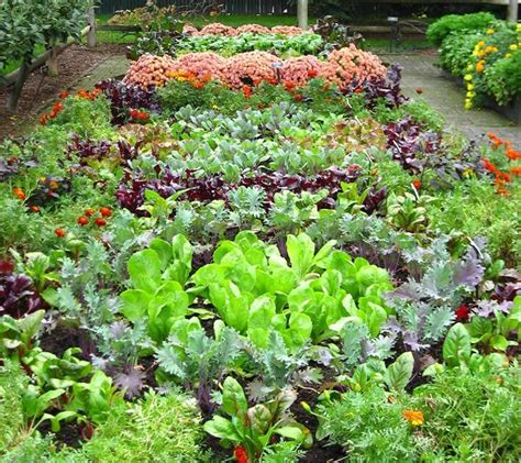 Pics For Gt Community Vegetable Gardens Community Vegetable Gardens