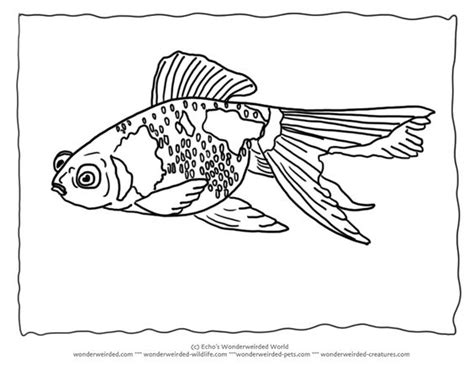 blank fish coloring pages goldfish coloring pages blank 2 goldfish picture to color