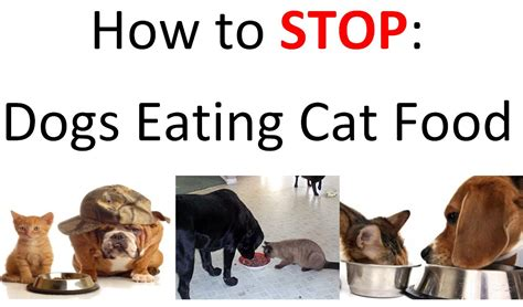 is it ok for dogs to eat cat food is it ok if my eats cat food family finds