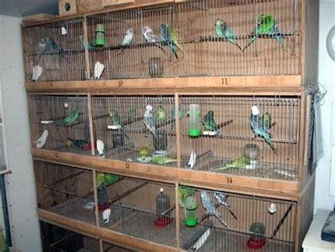 Tempat Pakan Burung Puter cara membuat sangkar burung susun mudah dan praktis