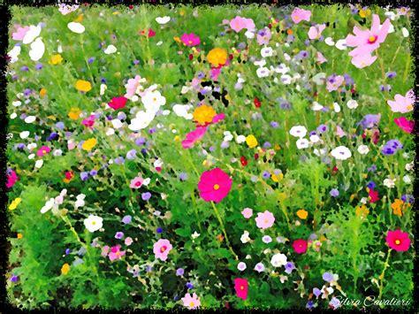 immagini di ci di fiori terre di fiori il di cavalieri
