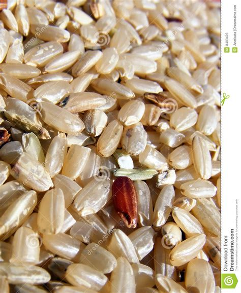 brown rice pattern close up of brown rice stock photos image 8483423