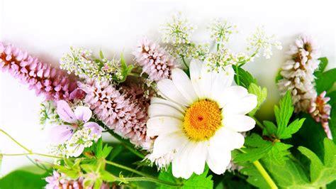 wallpaper hd 1920x1080 flowers free hd flower wallpapers wallpaper cave