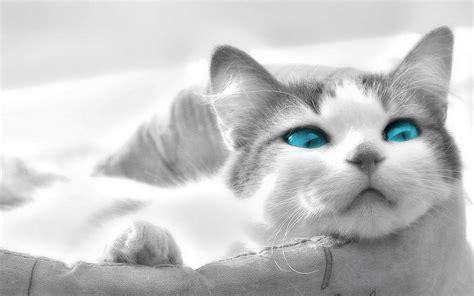 Imagenes Para Fondo De Pantalla Gatos | fondos de gatos fondos de pantalla