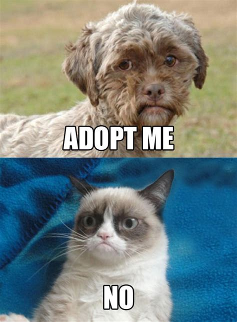 Know Your Meme Dog - dog with human face needs adoption grumpy cat know