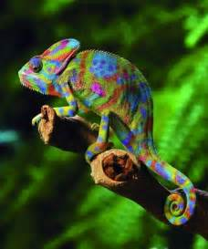 chameleon change color 301 moved permanently