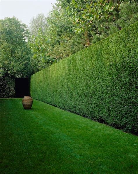 25 best ideas about evergreen the 25 best ideas about leylandii hedge on