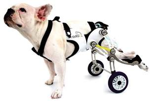 Build Your Own Dog Wheelchair » Home Design