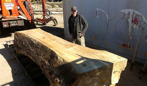 live edge elm wood slab refined elements live edge elm wood slab refined